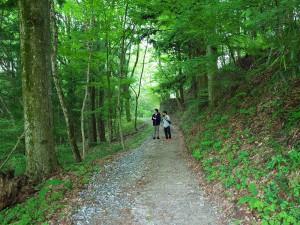 2日目は新緑の阿智村を散策しながら、さっそく自主研修(植生調査)を開始。