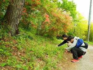 ヤマツツジが美しい昼神での調査風景。緑が美しく、風も心地よい1日でした。