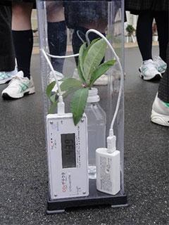 植物の光合成実験
